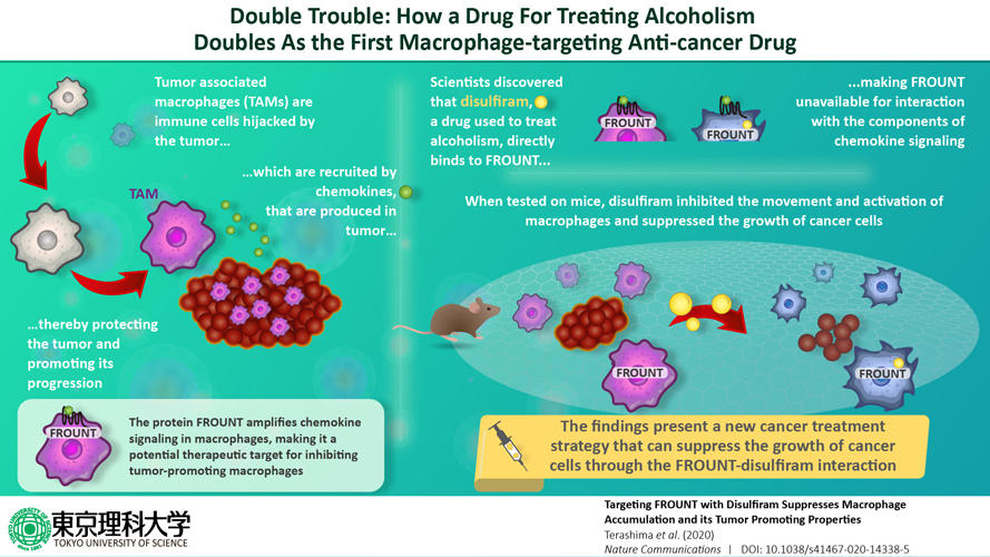 ouble trouble: A drug for alcoholism can also treat cancer by targeting macrophages