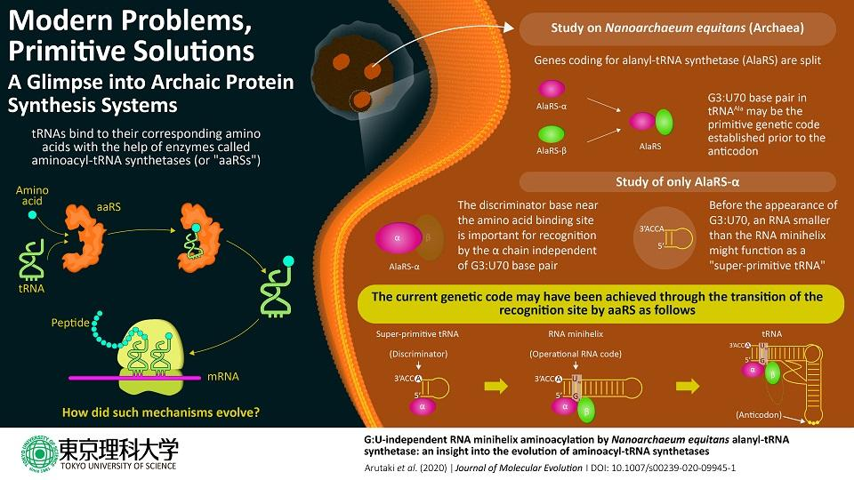 Modern Problems, Primitive Solutions: A Glimpse into Archaic Protein Synthesis Systems