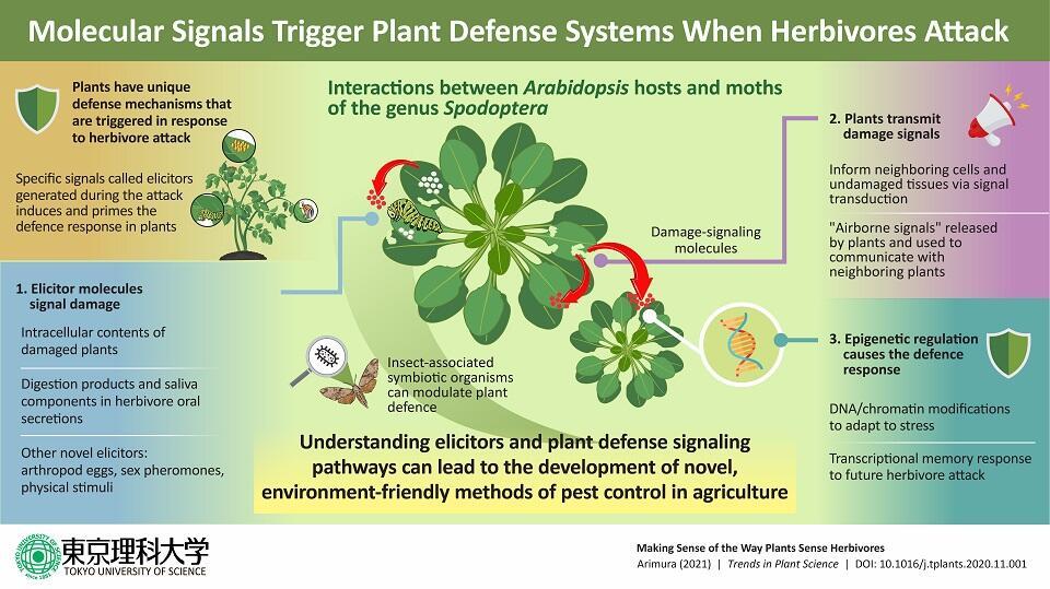 Perceiving Predators: Understanding How Plants