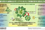 植物はどのように植食者を感知するのか <br />~植物の植食者認識機構についてのこれまでの研究を総括し、今後の展望を探る~
